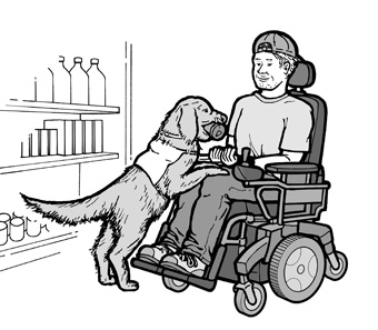 A service animal gives a can of soda to a young man using a wheelchair.